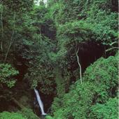 Selva Profunda
